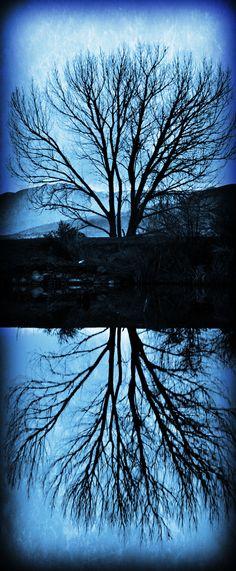 Tree, Utah Lake