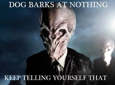 cats, angles, silenc, god, dogs, ghosts, doctor who, doctors, weeping angels