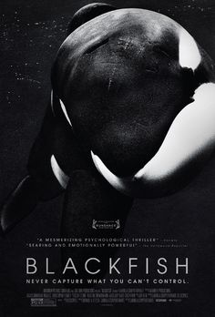 """Win advance-screening movie passes to the Sundance hit """"Blackfish"""" with a director Q courtesy of HollywoodChicago.com! Win here: http://ptab.it/10Cte"""