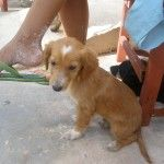 Helping the animals of Isla Mujeres