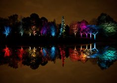 Island Of Light - Syon Park Gardens London Enchanted Woodland 2013 (1 of 1)