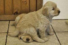 Puppy squash