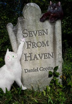 """Here's my book cover design for Daniel Grotta's soon-to-be-released short story collection """"Seven From Haven"""" -- Seven gentle ghost stories with O'Henry-like sensibility, charm and humor    http://pixelhallpress.com/seven_from_haven.html#"""