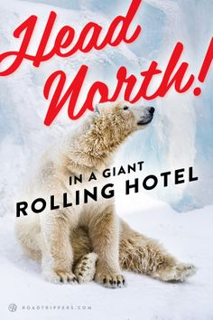 Spot Polar Bear in their natural habitat, while exploring the cold north!