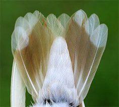 This Time, It's Leucistic (White Hummingbird)