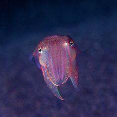Cuttlefish...coolest sea creatures!
