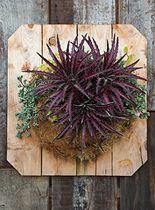 floral market, grubb garden, flora grubb, airplant, gardens, garden thing, air plant, container gardening, cactus