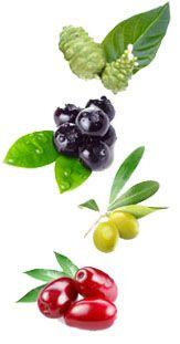 Noni, blueberry, olive and Cornelian cherry: The kings of iridoids.