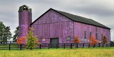 Fall At The Purple Barn Photograph  - Fall At The Purple Barn Fine Art Print