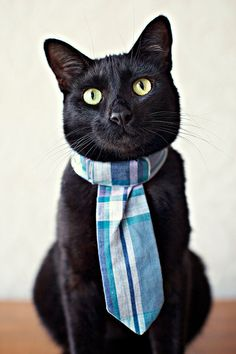 {handsome fellow} great kitty tie!
