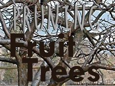 Pruning Fruit Trees - tips and techniques