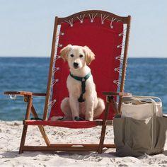 everybody loves the beach.