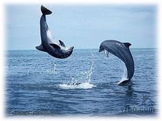 Dolphin watching on Captiva Island