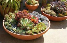 Vasos com plantas suculentas.