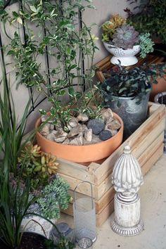 A patio garden