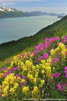 Looking onto Resurrection Bay from Mt. Marathon in Seward, Alaska... ~Stunning~