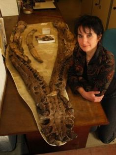 150-Million-Year-Old Pliosaur Had Arthritic Jaw: Dr. Judyth Sassoon of the University of Bristol, U.K., with the lower jaw of the Westbury pliosaur.