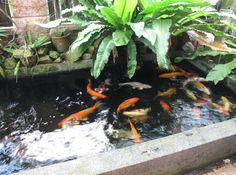 Garden ideas | Koi Fish Pond Design Ideas Beautiful Koi Fish Pond Design Ideas ...