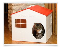 Cats need a place to call home too