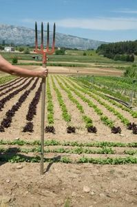 How to Keep a Vegetable Garden Weed-Free