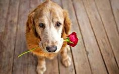 I have a flower for you
