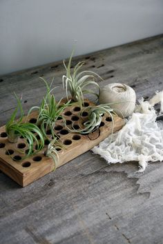 handmade wood caddy - perfect for airplants