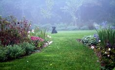 Misty mornings plant, secret gardens, backyard landscaping, cunningham landscap, matthew cunningham, dog, tradit landscap, landscape designs, landscap design