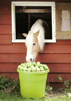 Apples and a palomino :)