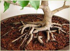 Bonsai Soil And Additives