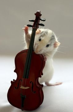 mice, animal pictures, van, musicals, pet, musical instruments, musician, cellos, rats