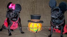 Cute Mickey and Minnie Mouse Pug Costumes... Coolest Halloween Costume Contest