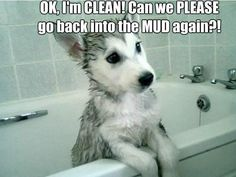 anim, funny pics, funny pictures, pet, circle of life, funny photos, puppi, dog, bath time