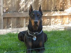 Parents Name: John and Tracy Rivera Pets Name: Max Pet Species: Dog Pets Favorite thing to do: Being wherever I was! Eulogy: This was Max. Our best friend, and our other dog's best friend. Ma...