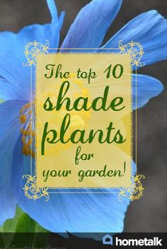 The top 10 shade plants for your garden!