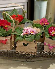 Valentine's Day Plant Gift | Step-by-Step