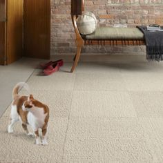 Flor Carpet Squares for Pet-friendly Design
