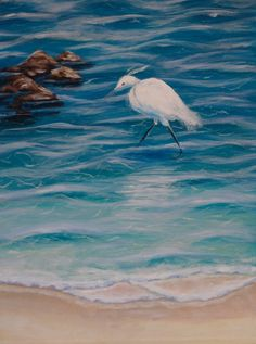 Egret - clear water, sunlit day