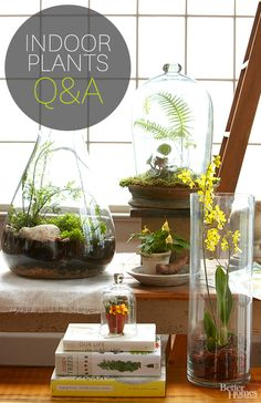 Get all your questions answered about indoor plants: