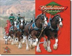 Budweiser Clydesdales Tin Sign, $8.95