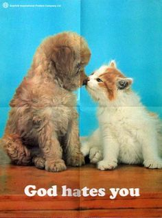 god hates you puppy kitty
