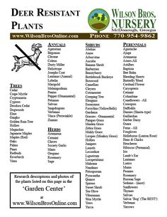 Deer Resistant Plants and Shrubs list | Printing Intructions: Right click anywhere on list below and select ...