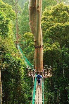 dream, bridg, place, rainforest