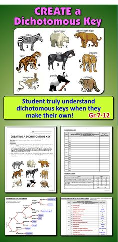 If you want students to truly understand dichotomous keys, you should get them to make their own!  This activity will get students to understand how a dichotomous is structured and how it functions. This gets to the heart of how to classify organisms and it will hone their observation skills.