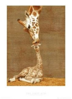 Hard not to get this if we do a giraffe room!