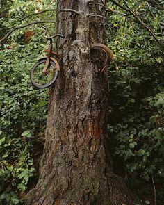 urban #bike #gardening   foto: burk uzzle