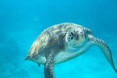 Turtle TurtleWingFoundation.org RIP sweet little Jack