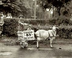 Harness goat in a parade in the 20's