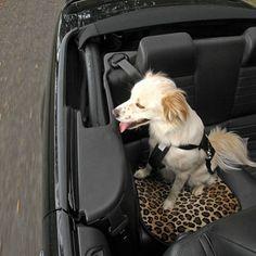 """Medium Pet Car Mat (20""""x17""""): $30.00  #PintoWin @GG Bailey #PinittoWinit"""