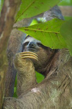 LOVE Sloths!
