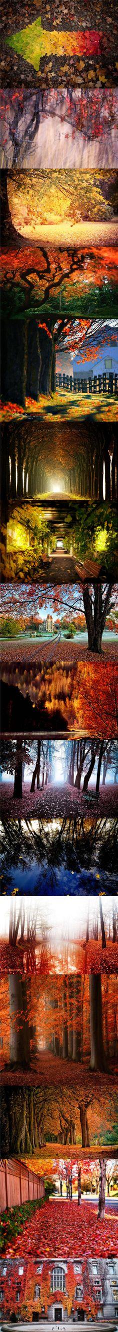 The autumn Season.